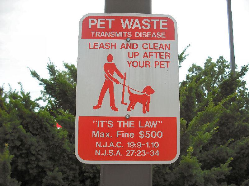 To get your dog to shit, whack him with a hockey stick?